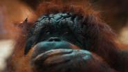 باحثون ..الكشف عن أقدم حيوان عاش على الأرض