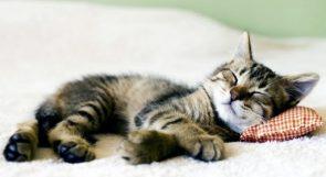"""منظمة الصحة العالمية: على مرضى """"كوفيد-19"""" الحد من مخالطة حيواناتهم الأليفة"""
